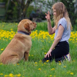 Brīvais laiks ar suni