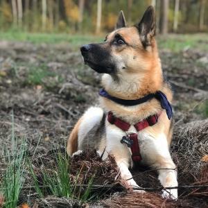Mans suns rudenī 2018