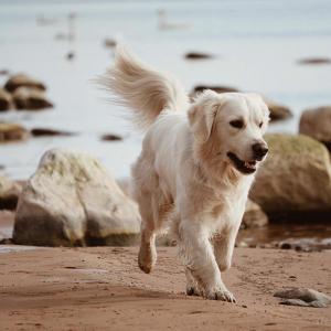 Suņa ceļojums