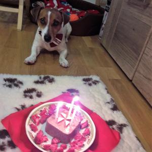 Suņa dzimšanas diena