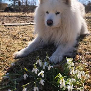 Suņa pavasara darbi
