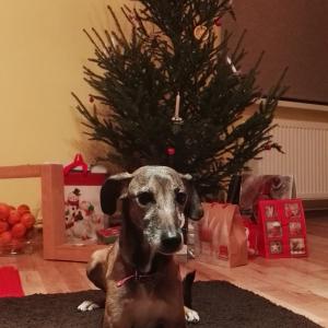 Suņa Ziemassvētki 2017
